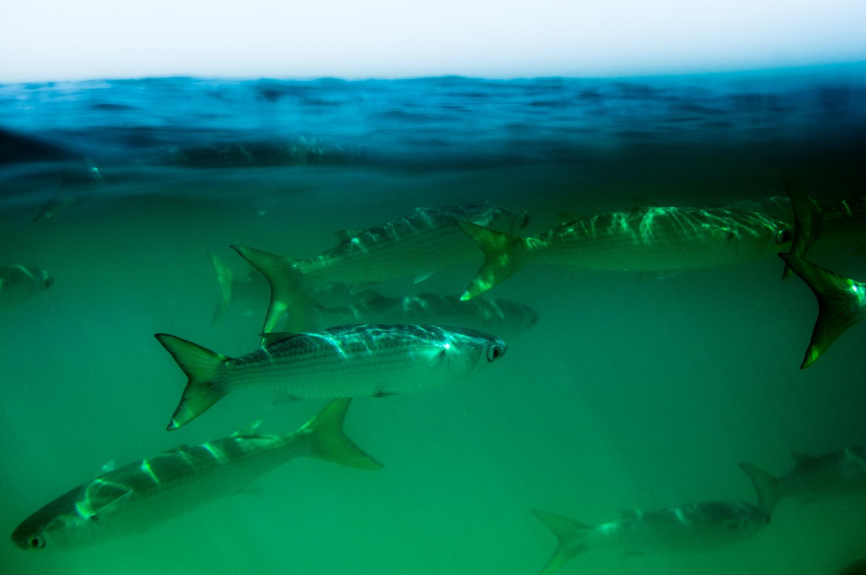 DSC_0457fishies
